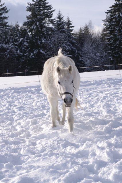 Bonbon im Schnee