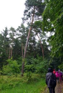Schatzsucher-im-Wald