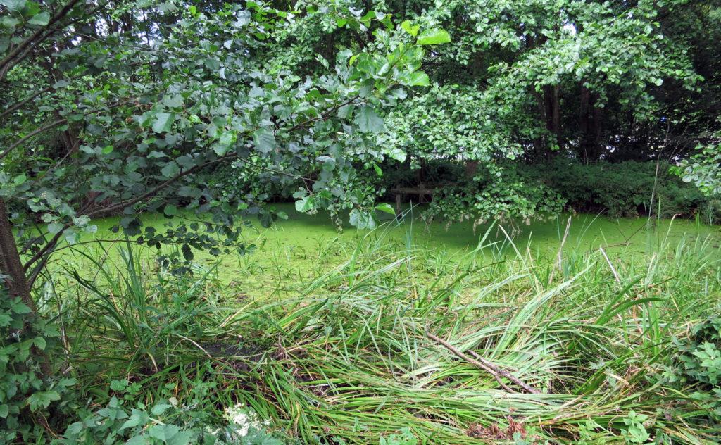 grüner Teich am Beginn des Grünen Meeres