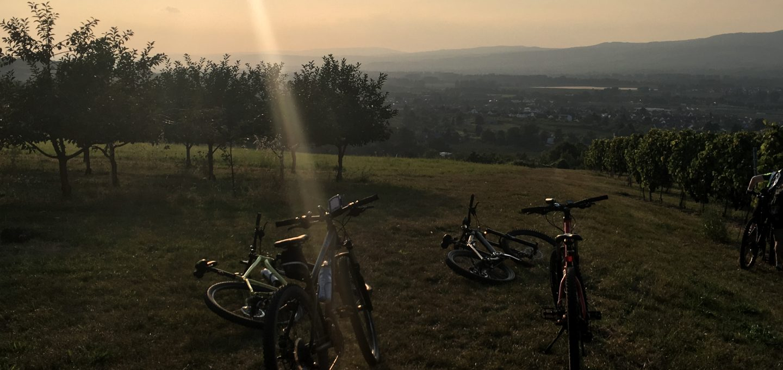 Mountainbikes am Weinberg