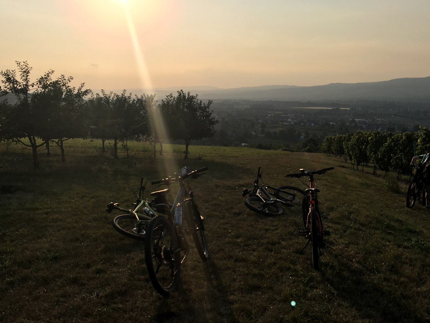 Mountainbikes am Weinberg