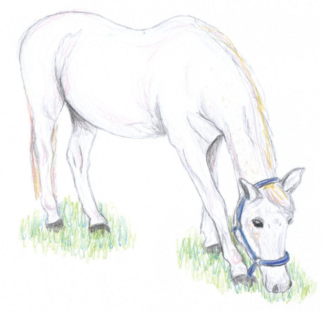 Zeichnung unseres Pferdes
