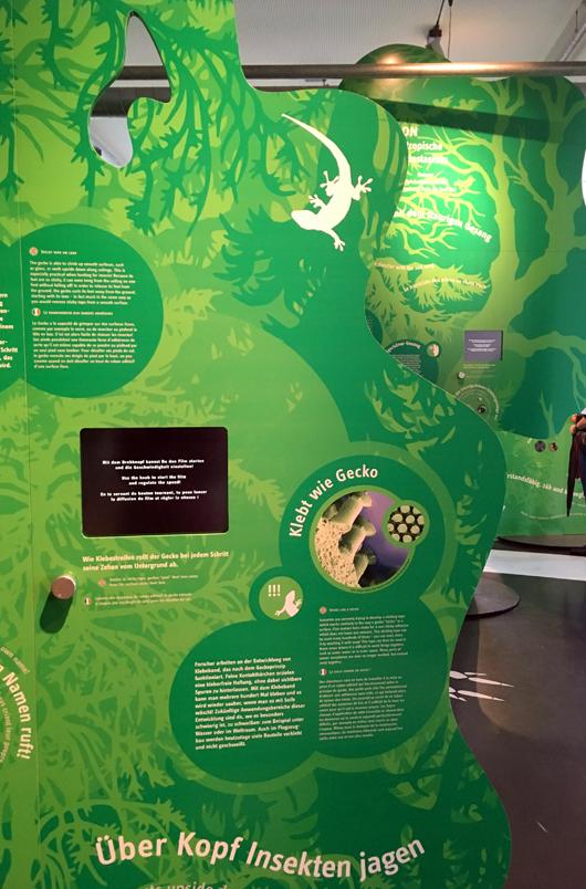 Ausstellungsfläche tierische Naturgesetze