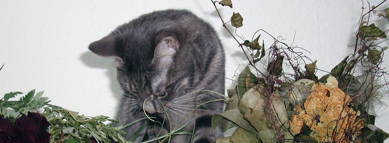Eine graue Katze putzt sich. Um sie herum sind getrocknete Blumen.